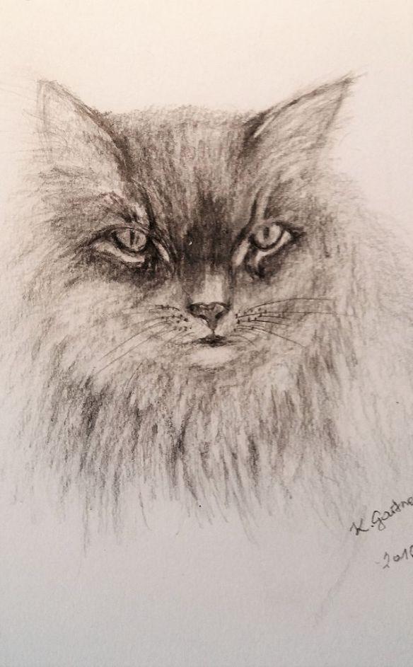 k-Katze