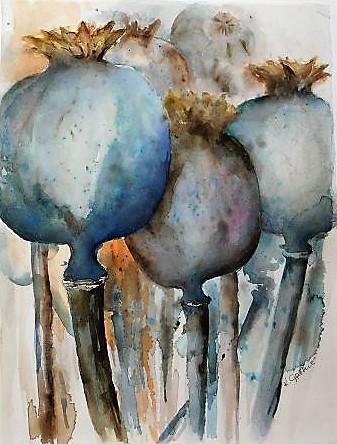 Mohnkapseln ,Aquarell, 29x38 cm